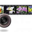 Colorful orchids photo with film strip — Stock Photo