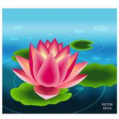 Beautiful pink lotus flower — Stock Vector