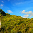 Lonely tree with green field — Stock Photo