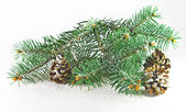 Fir and cones — Stock Photo
