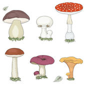 Mushrooms set — Stock Vector