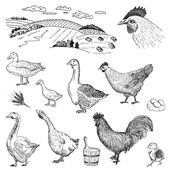 Poultry yard — Stock Vector