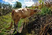 Milk Production — Stock Photo