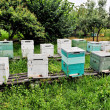 Painted Wooden Beehives — Stock Photo #35593631