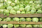 Tons Of Cabbage — Stock Photo
