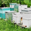 Painted Wooden Beehives — Stock Photo #36105131