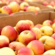 Crates Full Of Apples — Stock Photo