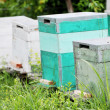 Painted Wooden Beehives — Stock Photo
