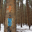 Old tourist routes markings on fir tree — Stock Photo #37346931