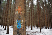 Old tourist routes markings on a fir tree — Stock Photo
