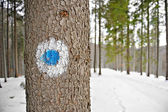 Punto azul marcado — Foto de Stock