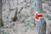 Red arrow hiking sign on a tree — Stock Photo