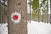 Red dot hiking sign on a tree — Stock Photo