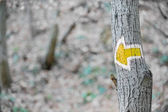 Yellow arrow hiking sign on a tree — Stock Photo