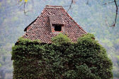 Overgrown ivy on abandoned house — Stock Photo