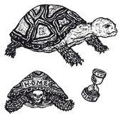 Tortoises Set — Stock Vector