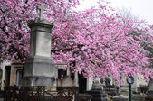 Paris. Pere Lachaise Cemetery — Stok fotoğraf