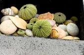 Shells — Foto Stock