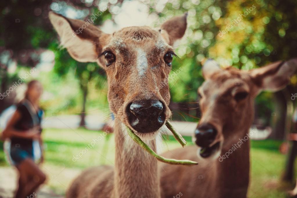 Thailand, Pattaya, zoo, animals, travel, heat, food, animal feed ...