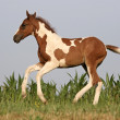 Horse in move — Stock Photo