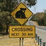 Постер, плакат: Australia Zoology