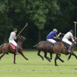 Stock Photo: Polo Sport