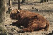 Zoology, farm animal — Stock Photo