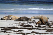 Australia, Kangaroo Island — Stock Photo