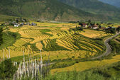 Bhutan, Punakha — Stock Photo
