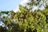 Botany — ストック写真
