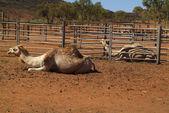 Australia, Outback — Stock Photo