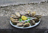 France, Oyster — Stock Photo