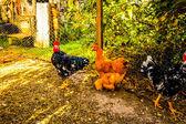 Animals in the barnyard — Stock Photo