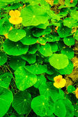 Naturaleza variada — Zdjęcie stockowe