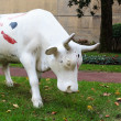 The cow of Athletic Club Bilbao — Stock Photo