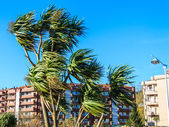 Wind over palm trees — Stock Photo