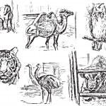Постер, плакат: Zoological garden