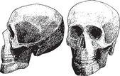 Crâne — Vecteur