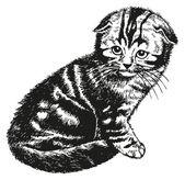 Złóż kotek — Wektor stockowy