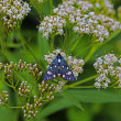Butterfly and flowers — Stockfoto
