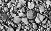 Black and white stones — Stock Photo