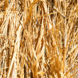 Abstract background made from dry grass — Stock Photo #35497515