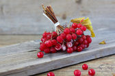 červené bobule kalina — Stock fotografie