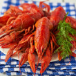 Boiled crayfish — Stock Photo