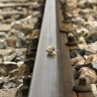 Snail on track train — Stock Photo