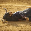 Dragging of bull died — Stock Photo #34225463