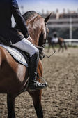 Rider competing in dressage test classic, Andalusia, Spain — Foto de Stock