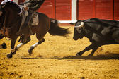 Brave bull chasing horse during a bullfight, Spain — Stock Photo