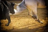 Odvážný býk honí koně — Stock fotografie