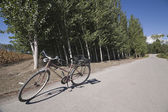 Bicycle parked near a forest — 图库照片